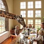 Family Safari - Atelier Africa