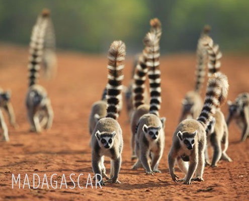 Madagascar Safari